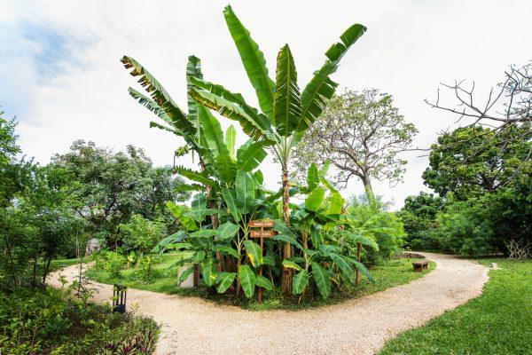 Zuri-Zanzibar-Gewürzgarten-Sansibar-Take-Memories